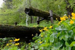 Lesné studničky sú vernou súčasťou prírodnej scenérie.