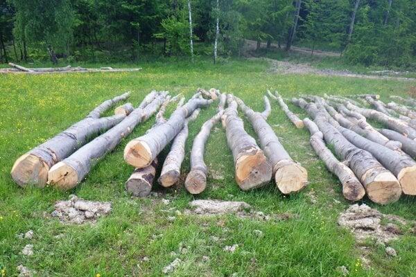 Vyrúbané stromy.