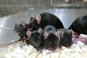 Zdravé myši, ktoré sa vyvinuli po oplodnení