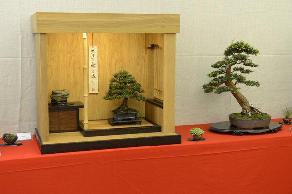 Výstava bonsajov v Botanickej záhrade UPJŠ sa koná pravidelne.