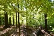 Národná prírodná rezervácia Havešová.