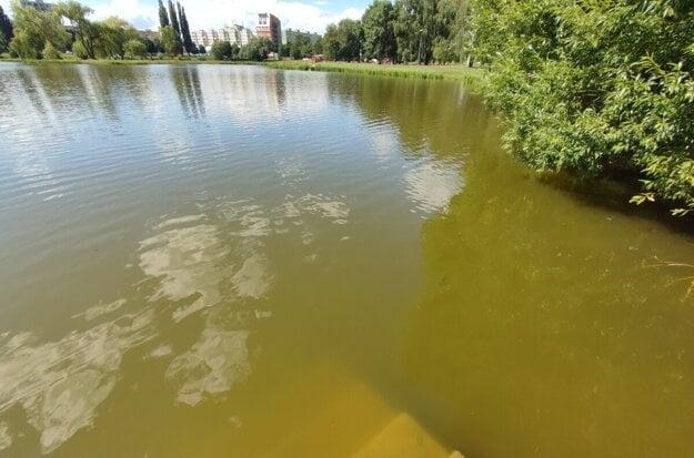 Voda v jazere je aktuálne hnedo-zelená.