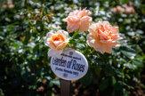 Ako zo zbúraniska vyrástla za dva roky ružová záhrada