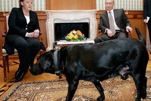V roku 2006 počas stretnutia s Putinom, stretla Merkelová aj jeho psa Konni. Merkelová, ktorú na ktorú predtým jeden zaútočil , má strach zo psov.