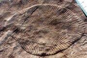 Fosília ediakarského živočícha.