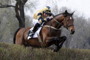 Jan Faltejsek vyhral dostihy aj v Bratislave. V roku 2009 s koňom Masini vyhral 36. ročník Jarnej ceny Petržalky.