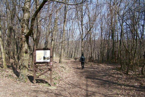 Súčasťou Chránenej krajinnej oblasti Malé Karpaty je aj lesopark v Modre-Harmónii.