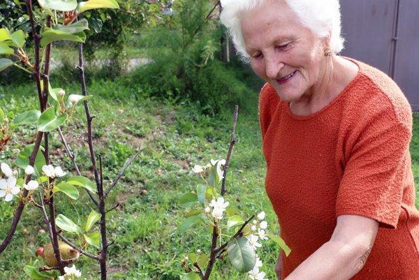 Štefánia Richterová si zakvitnutú hrušku všimla v susednej záhrade.