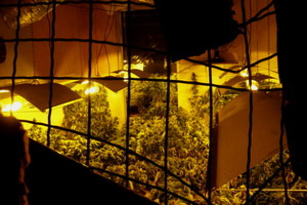 Marihuanu pestovali v neobývanom dome v malej obci.