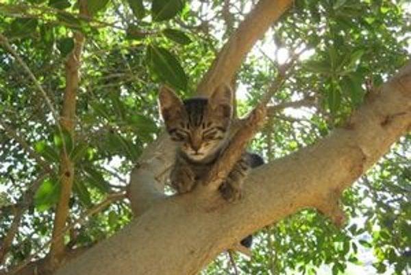 Mačky na stromoch hasiči zachraňujú najčastejšie.