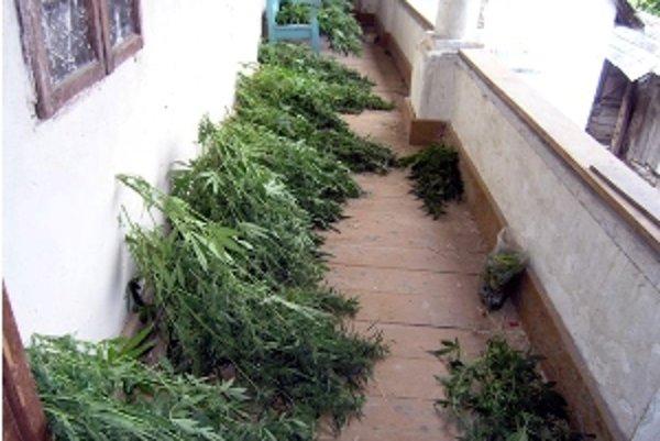 Ďalšieho pestovateľa marihuany odhalili policajti v Cíferi.