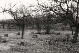Súdne kamene v Trstíne.