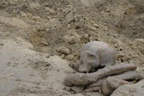 Rozhádzaný a vykradnutý praveký hrob.