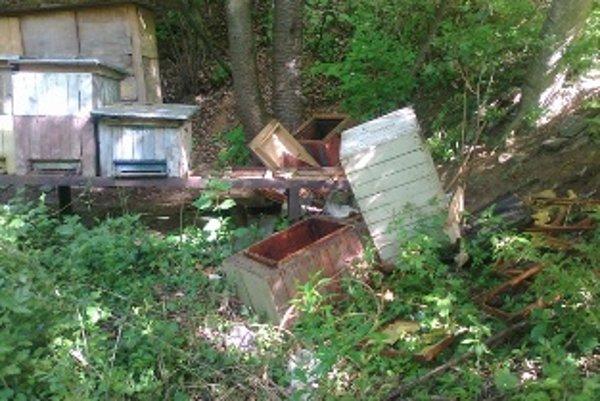 Medveď hnedý zanechal v Bodovke po hostine na včeľom mede takúto spúšť.