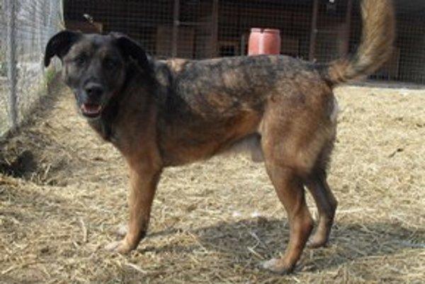 Azar je bezkonfliktný, veselý, kamarátsky k ľuďom i k psom