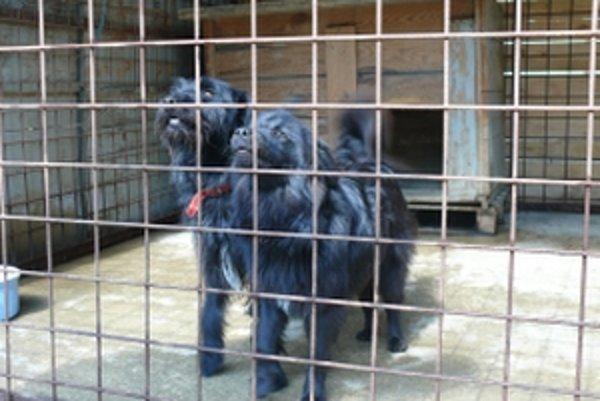 Opustené psy nájdu často nový domov v útulku.