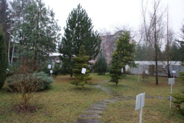 Arborétum budú môcť zatiaľ navštevovať len žiaci zo škôl a záujmových krúžkov