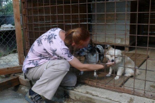 Puppy box mal šteniatka chrániť, pre bezohľadnosť ľudí ho museli zrušiť.