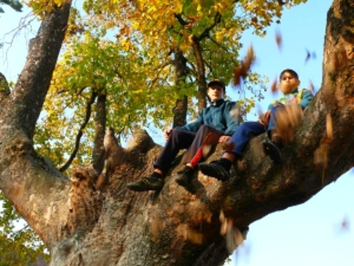 42077c9b2c Prihláste svoj strom do ankety Strom roka - mytrencin.sme.sk
