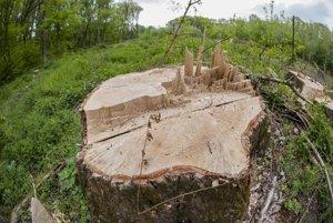 Vyrúbaný strom na ostrove Sihoť.