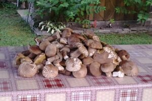 Takýto hubársky úlovok potešil v prvý septembrový deň Žiarčana Jána v okolí Novej Bane.