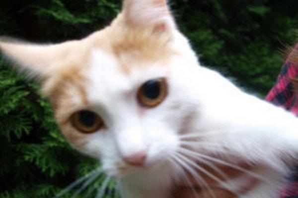 Tulsi sa chytila do drôteného oka. Musela jej poôcť veterinárka.
