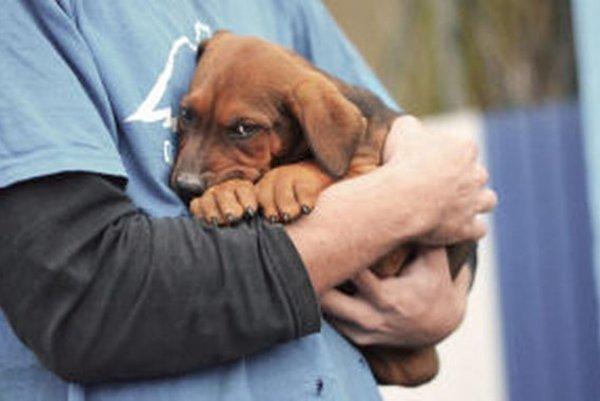 Združenie, ktoré prevádzkuje útulok, našlo domov stovkám psov.