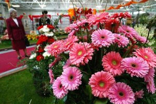 V Banskej Štiavnici oranizujú kvetinovú šou s výstavou ruží.