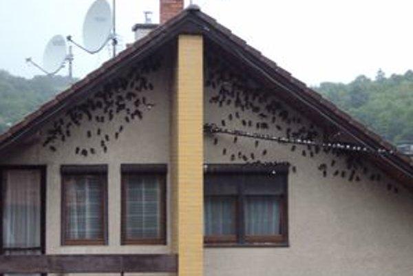 Dom v Psiaroch bol doslova obsypaný vtákmi.