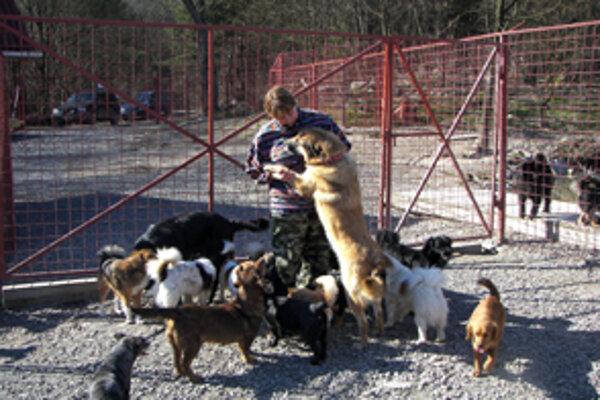 Jozefína Danková nemôže urobiť ani krok bez toho, aby nemala za pätami hrču psíkov.