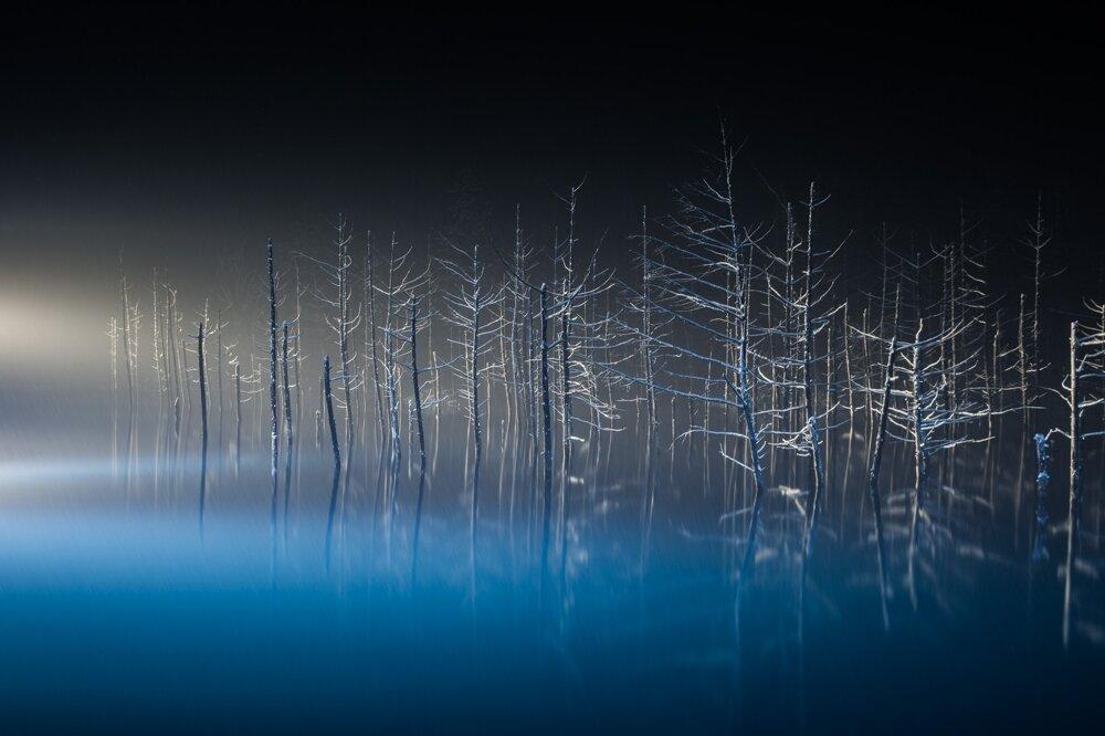 Baletka. Mladé stromčeky smrekovca v Biei na japonskom ostrove Hokkaido akoby mali pri tomto osvetlení ruky a nohy a pripomínali baletku.
