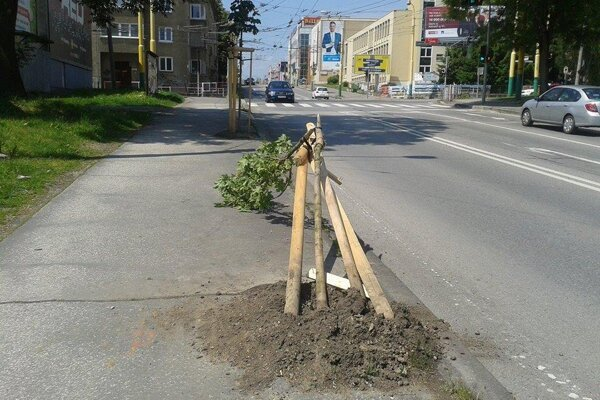 Zničené stromčeky v Žiline.