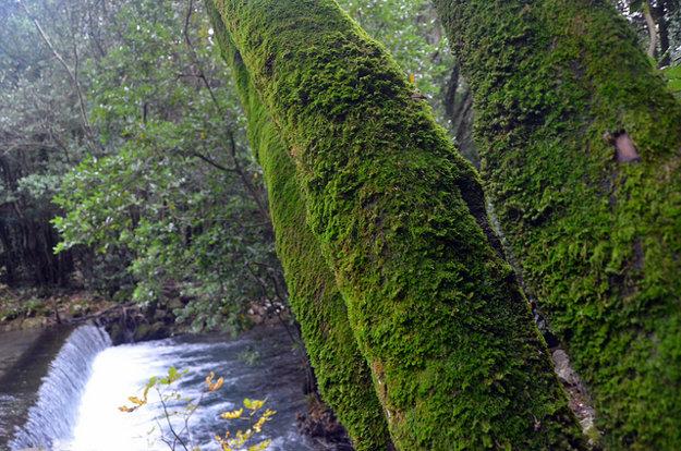 Riečka Ljuta je jedným z prírodných klenotov Konavle.