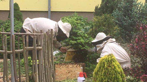 Do pol hodinky za včelou matkou prileteli aj ostatné včielky