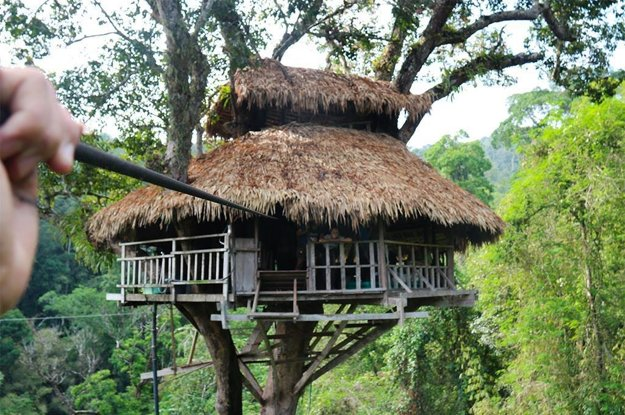 Hotel v korune stromu v džungli.