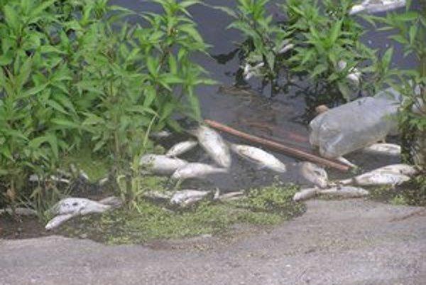 V Sebechleboch unikla do potoka nezmáma látka. Uhynulo asi 250 kg rýb. Zachytili sa na hati v Tupej neďaleko Šiah.
