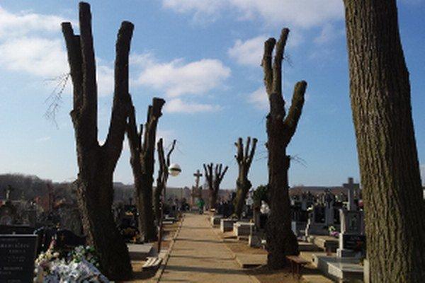Likvidačne orezané lipy na cintoríne v Štefanove.