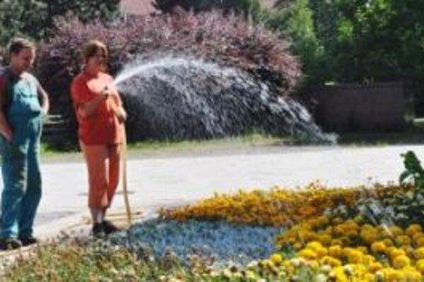 Zeleň si v horúčavách vyžaduje zvýšenú starostlivosť.