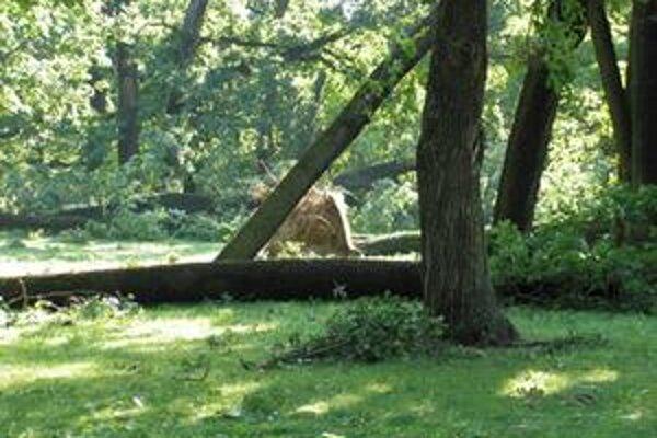 Na predaj je najmä o drevo zo stromov, ktoré popadali v Zámockom parku a okolí.