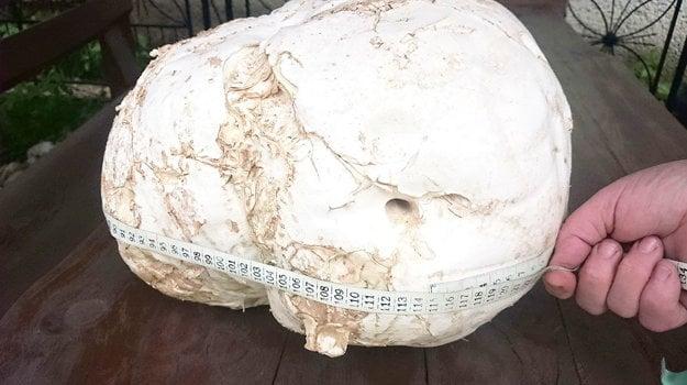 Obvod 114 centimetrov, váha 3,77 kilogramu.