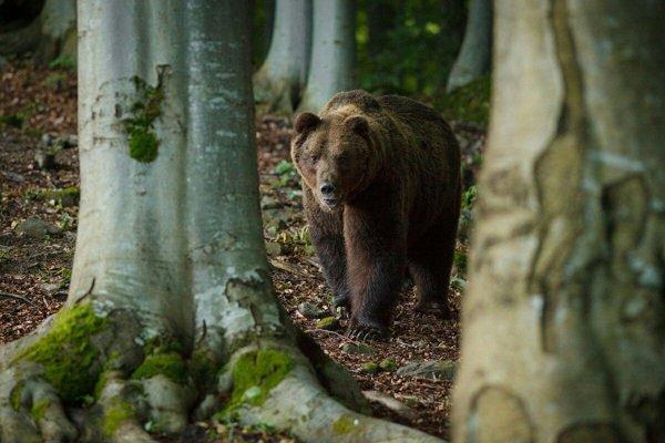 V okolí Kláštora pod Znievom sa vraj pohybuje veľa medveďov.