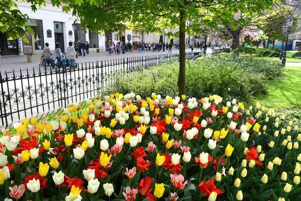 Rozkvitnuté centrum. Stovky farebných tulipánov vytvárajú úžasnú atmosféru.