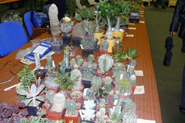 Nielen pre kutilov. Každý záhradkár a domáci majster nájde na výstave to, čo potrebuje.