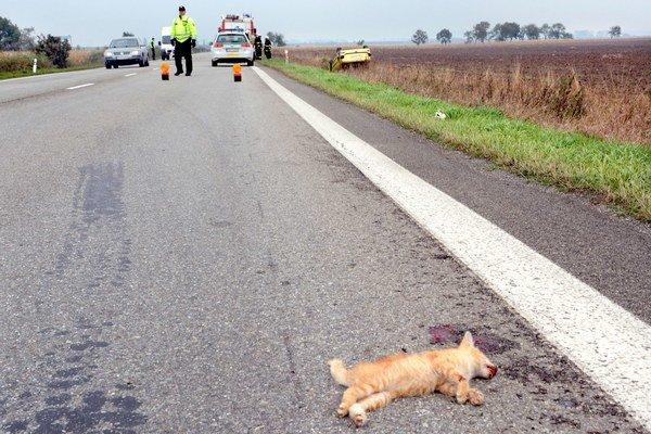 Po nehode. Mačiatko neprežilo, peugeot skončil v priekope.