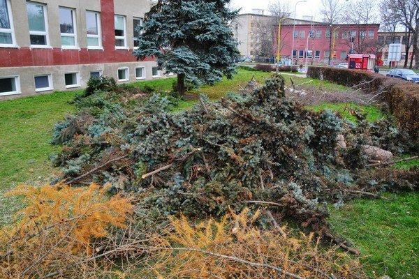 Pred školou na Tomášikovej. Vo štvrtok tam zrezali ihličnaté stromy a jednu brezu.