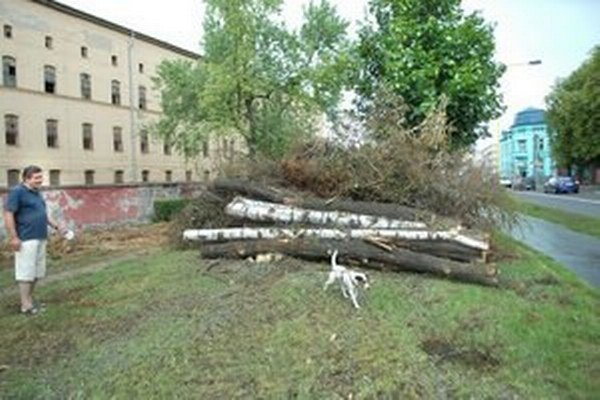 Kulturpark už v roku 2012 o časť stromov v aleji na Rastislavovej ulici prišiel.