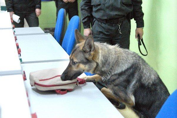 Prehliadka. Vycvičený pes drogu na 100 % vyňuchá.