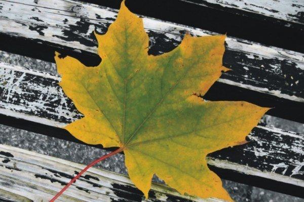Fotka víťazky. Stavila na farebnú jeseň.