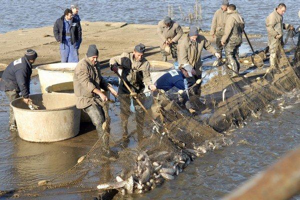 Prvý výlov. Väzni sa namakali, veľa rýb im ušlo.