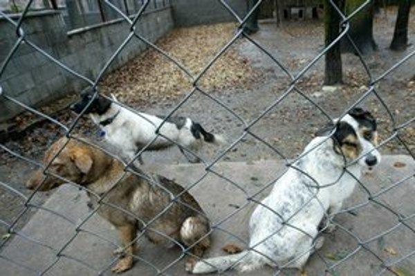 Týrané psy často končia v útulkoch. Ten z Roštára také šťastie nemal.